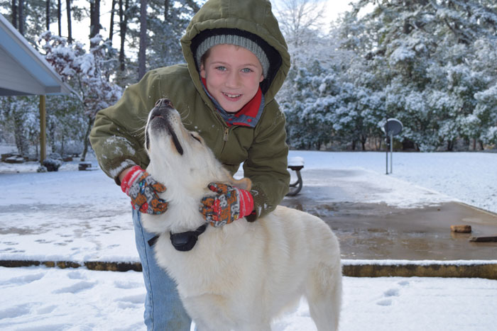 Snow-dog-1